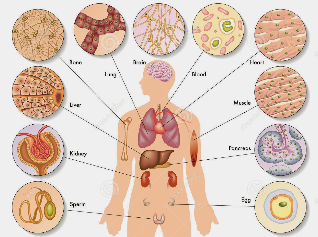 skolko-sperma-nahoditsya-v-organizme