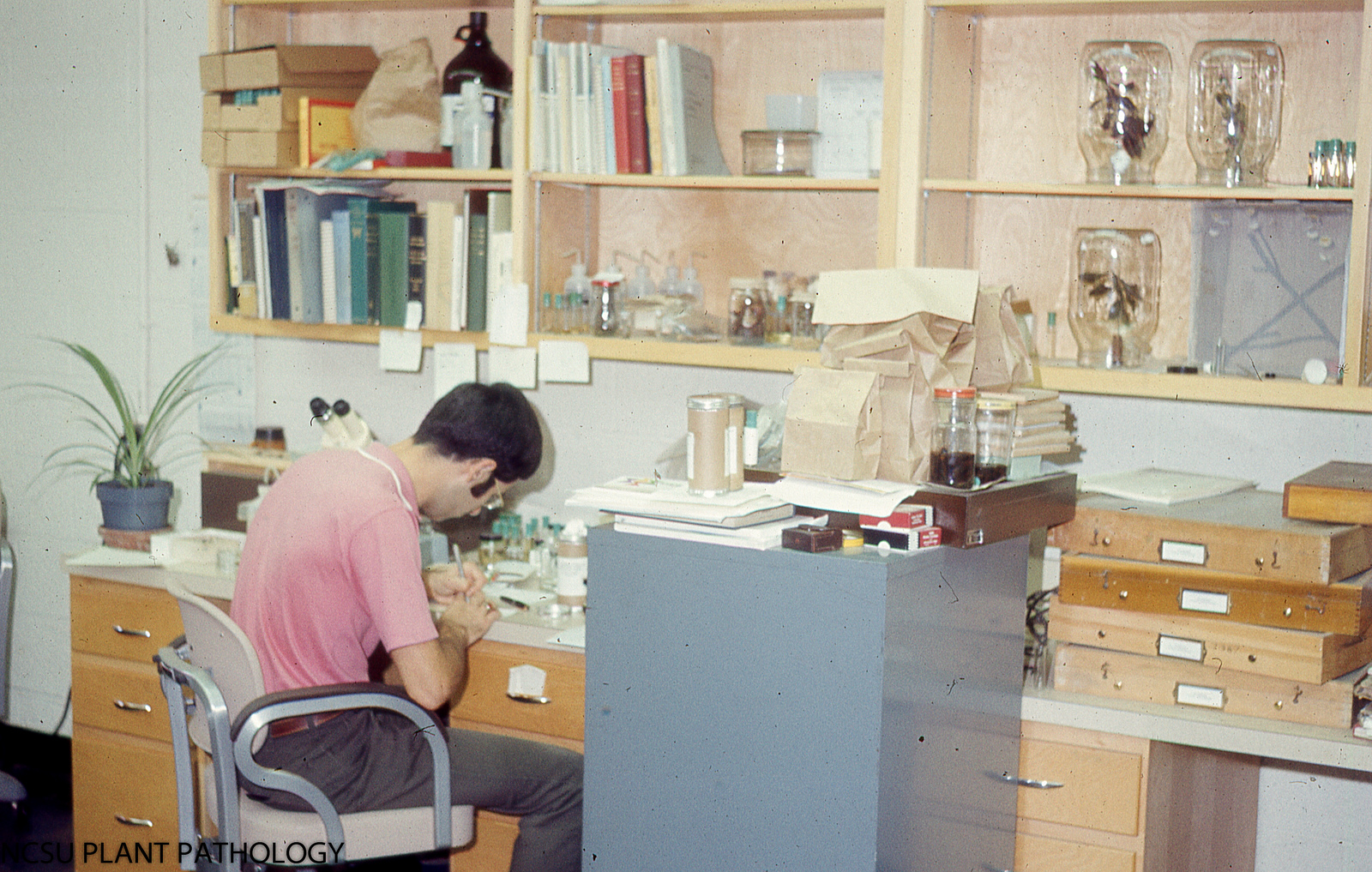 David Stephan writing among insect specimens. August 1973.