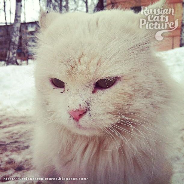 Sad Instacats Cat 07