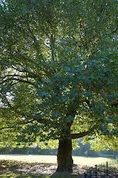 terrific tree