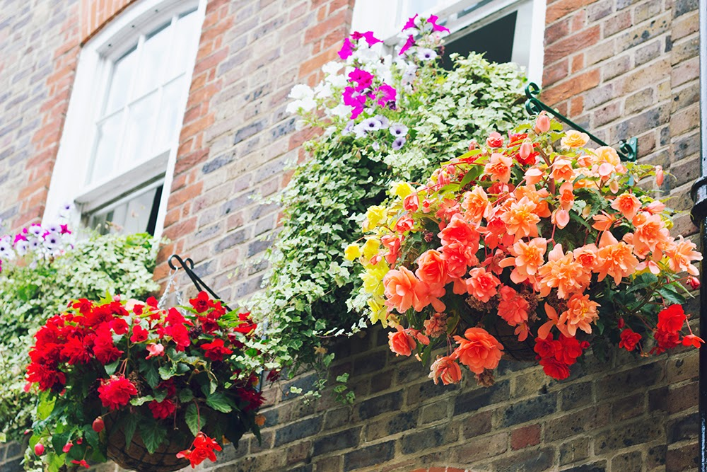floral window boxes flowers london