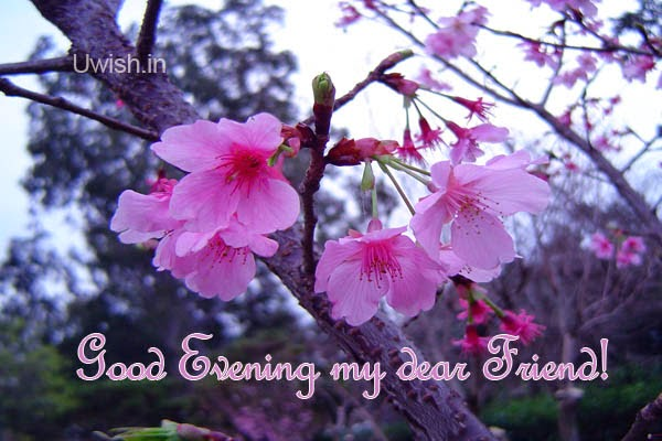 Good Evening my dear friend e greetings and wishes with purple blossomed evening flowers.