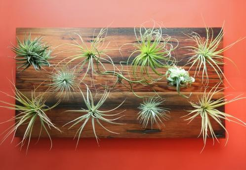 Designcandy veritcal gardens living pieces of art for Air plant art
