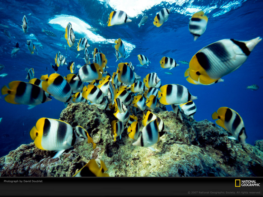 Fish Wallpapers Fish Pictures Fish Photos Fish Wallpapers