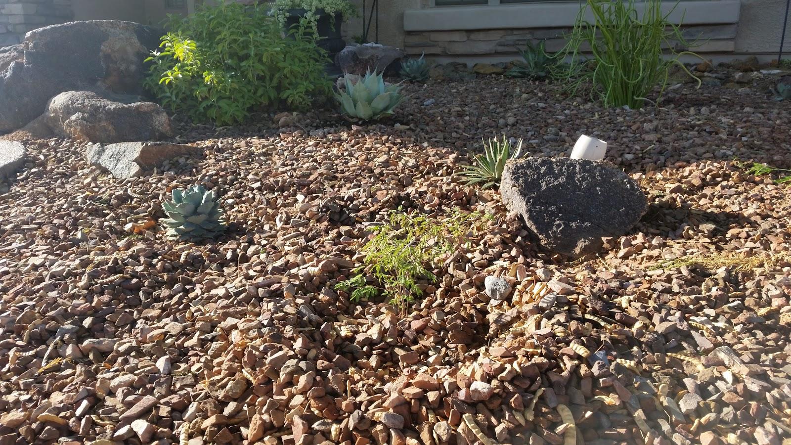 Desert Yard and Garden: Labor Day Planting