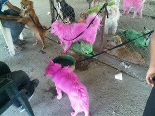 Funny Colored Dogs