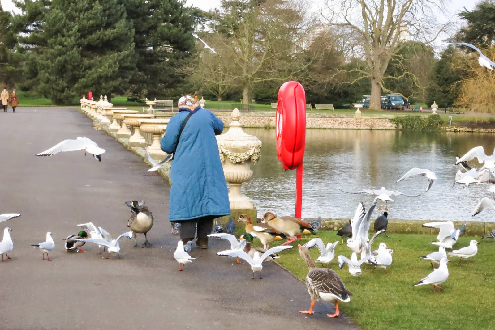 a lady feeding all kinds of birds in the Kew Gardens