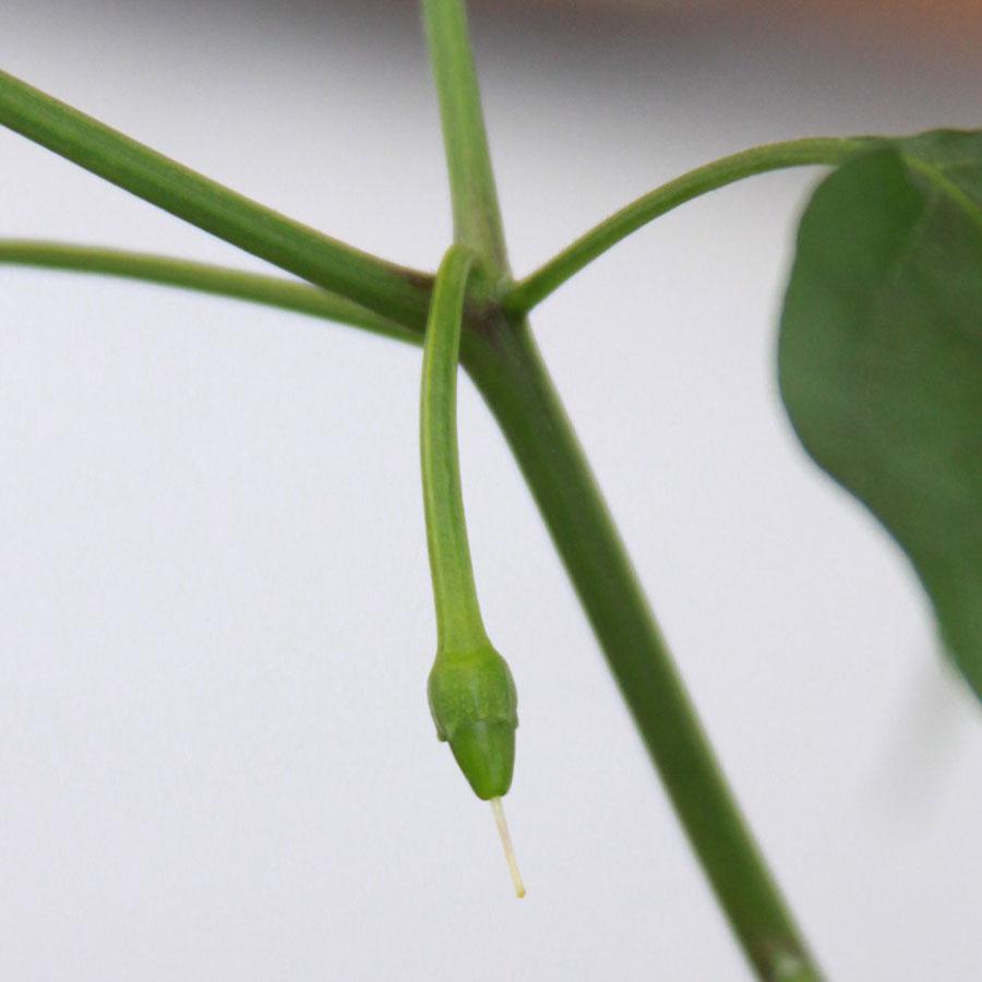 Los diarios vegetales octubre 2012 for Plantas de exterior chile