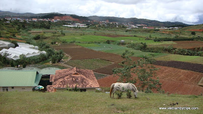 Dalat city - on the way to Langbiang moutain