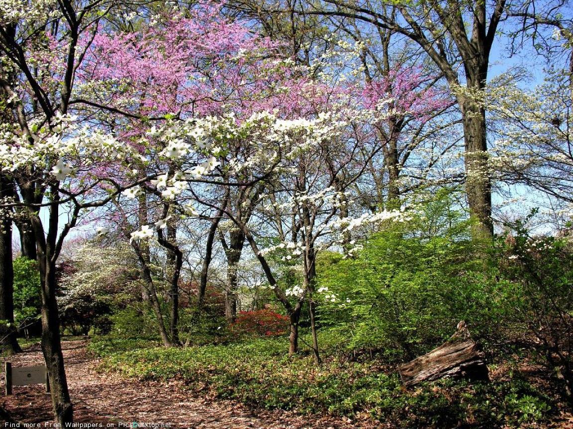 http://2.bp.blogspot.com/-Cd9hHj60i88/Tw_DTiNkDCI/AAAAAAAAE70/_Plr2Euy3LI/s1600/PicsDesktop.net_55.jpg