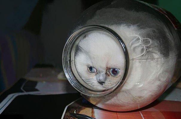 funny cats,1