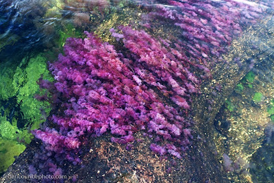 cano cristales 4%255B2%255D أجمل أنهار العالم ، نهر كانو كريستال ذو الألوان الخمسة في كولومبيا