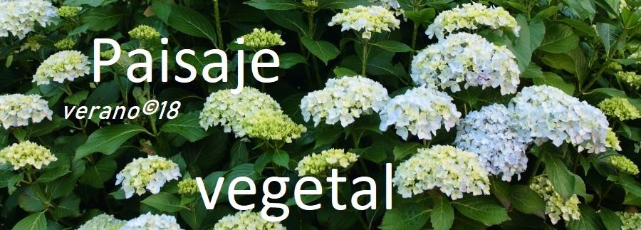 Paisaje vegetal