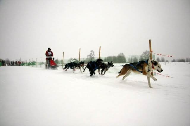 """многодневная гонка """"Северная надежда"""" 2010"""