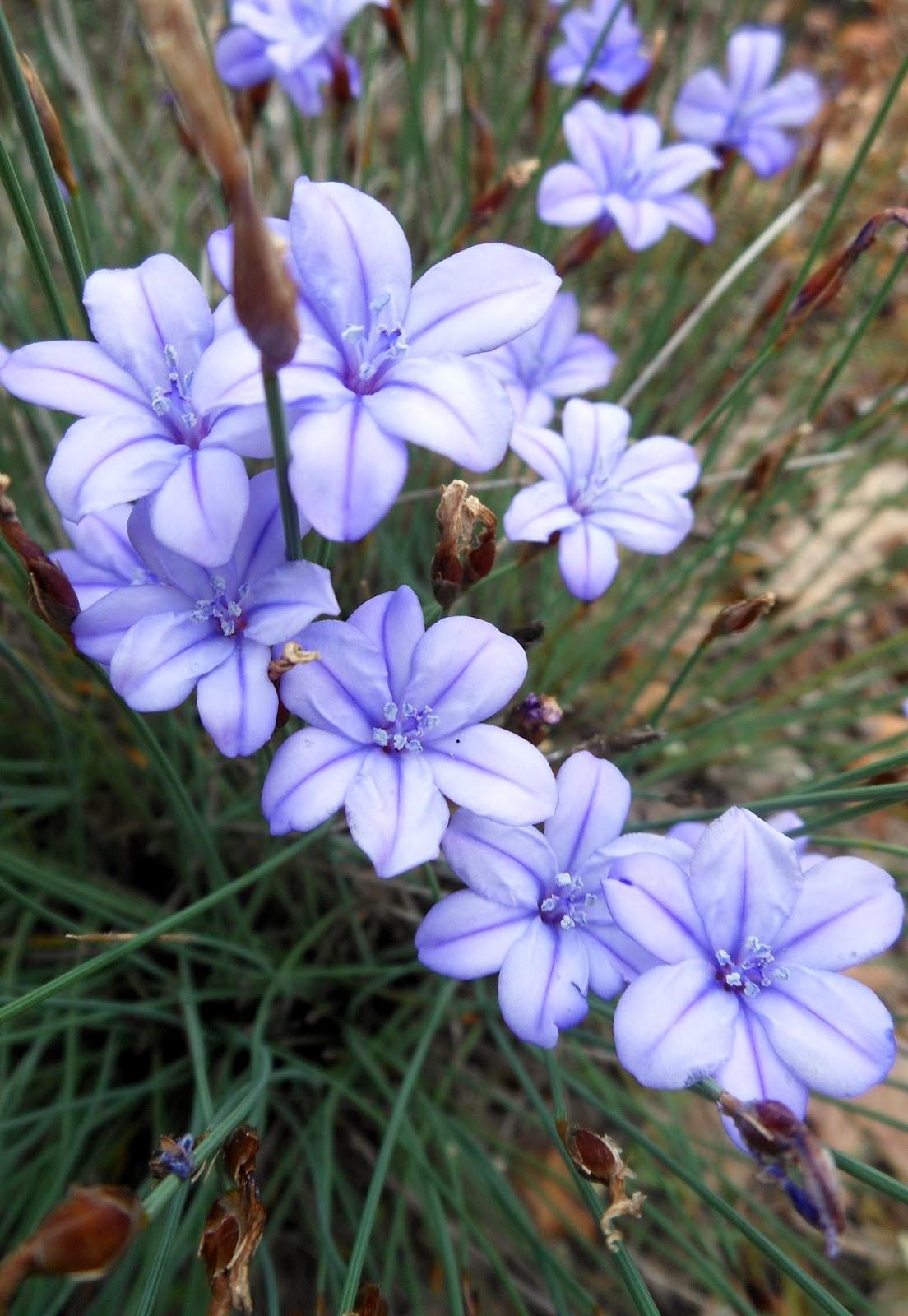 Le jardin de lumi re la voie des fleurs for Lumiere de jardin