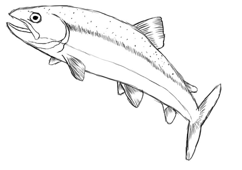 Fish drawing pictures drawing pictures for How to draw a fish