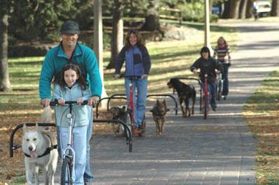 Urban Mushing ejercicio para perros