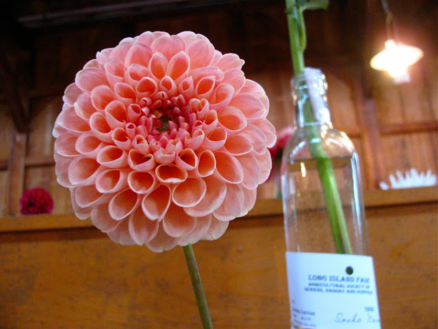 Dahlias-from-the-Long-Island-Fair-at-Old-Bethpage-Village-Restoration