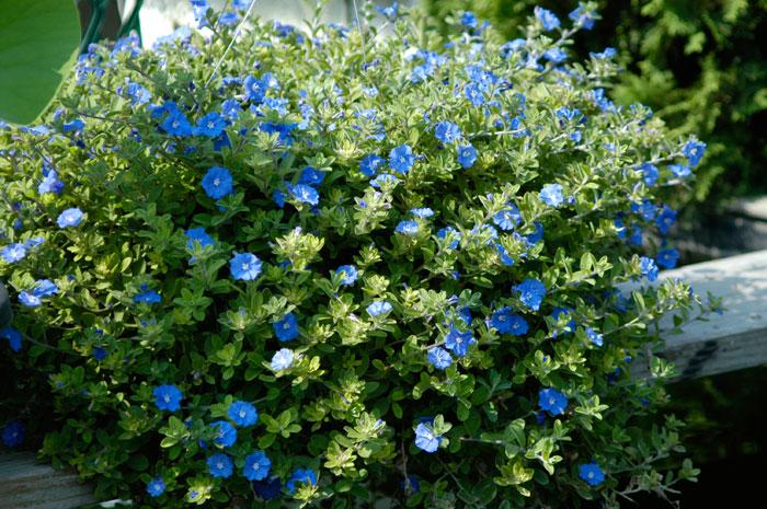 da Terra DICA DO DIA 17 Plantas para montar um jardim vertical