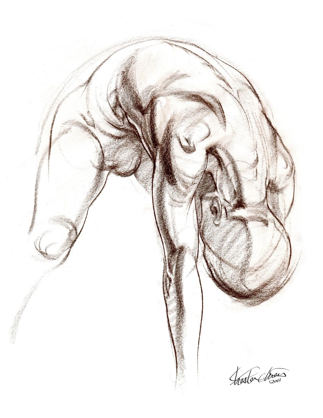 Chester Chien: 10 mins Anatomy Study