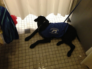 Coach lying on the shower floor with his head poking under the shower curtain.