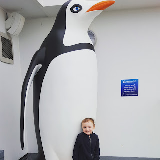 Silent Sunday - Penguin