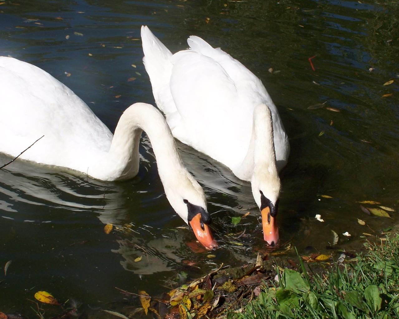 beautiful water birds pictures