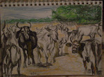 """Herd of Cattle"" pencil drawing"