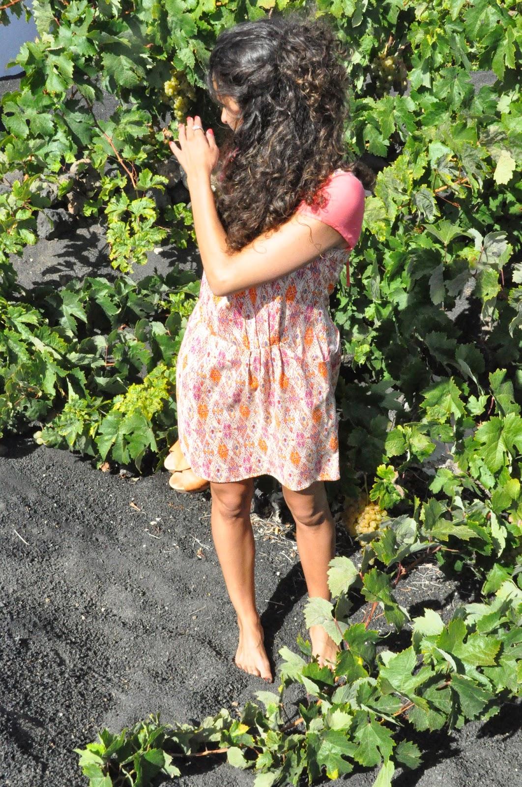 estoy de pie situada entre las viñas, mirando hacia un lado, se puede apreciar un racimo de uvas que roza el suelo