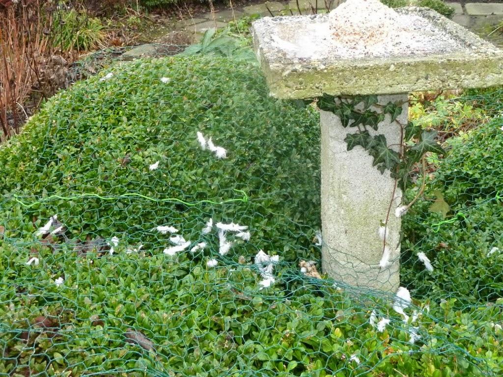 In m jn tuin tuinfoto 39 s januari - Bijzonder tuinfoto ...