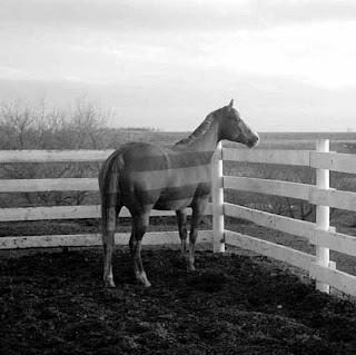 خلفية حصان