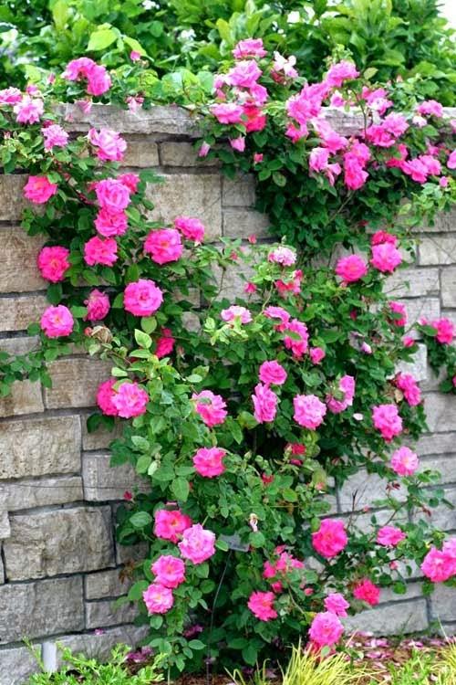 Nhiều loại cho hoa 4 mùa và mùa nào cũng rực rỡ  tươi tắn đầy sức sống