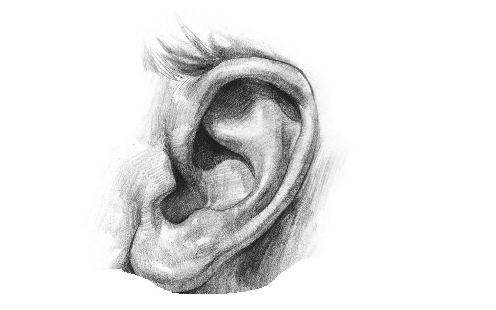 Simple Ear Sketch