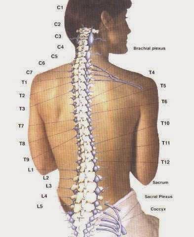 Trattamento di un cemento di spina dorsale