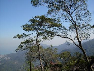 Árvores no Alto do Corcovado - Rio de Janeiro