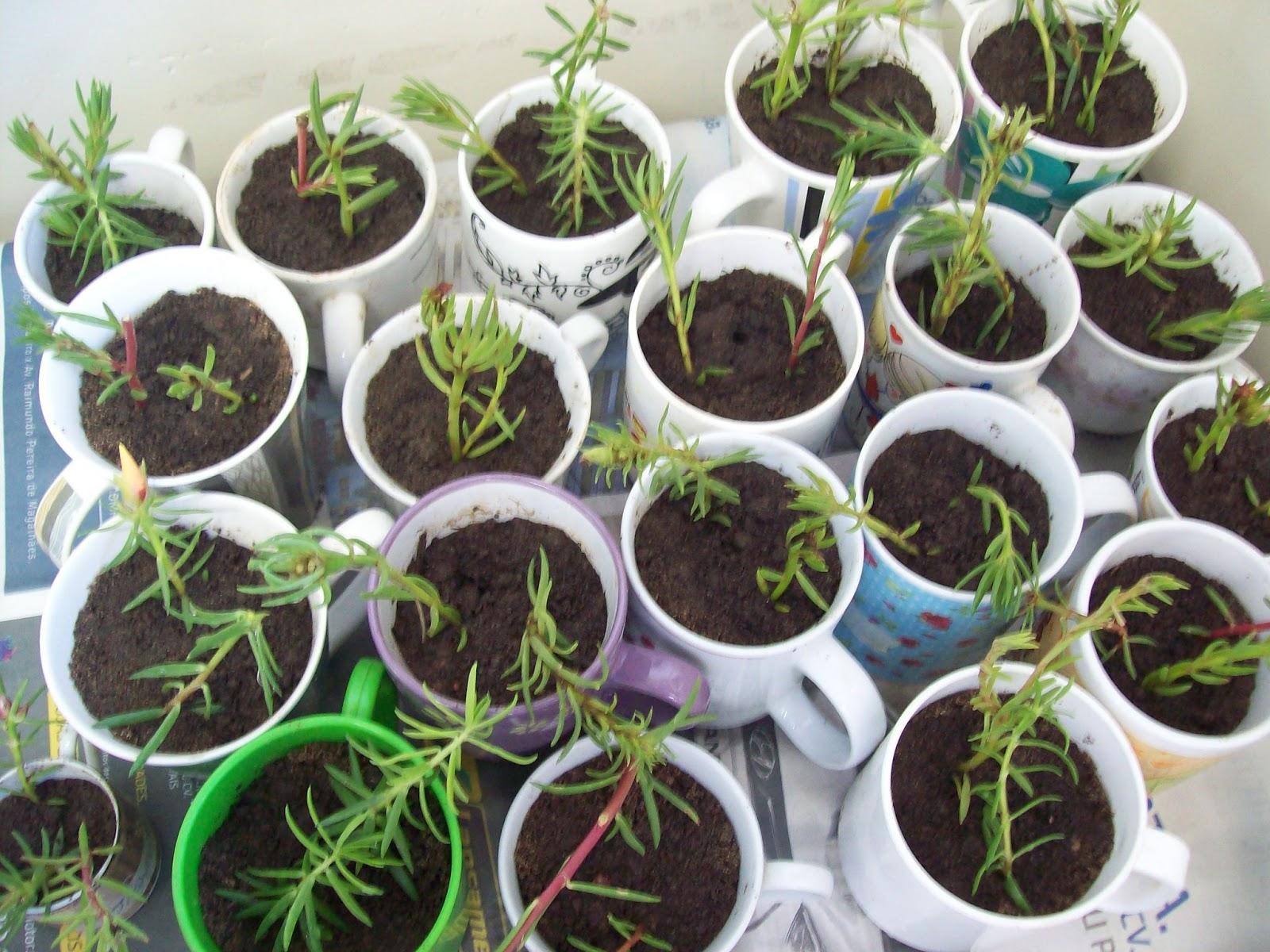 Blog da Geralda A reprodução das plantas