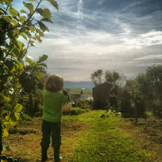 Orchards can be fun and productive, join us on the journey at www.facebook.com/lifeonpigrow