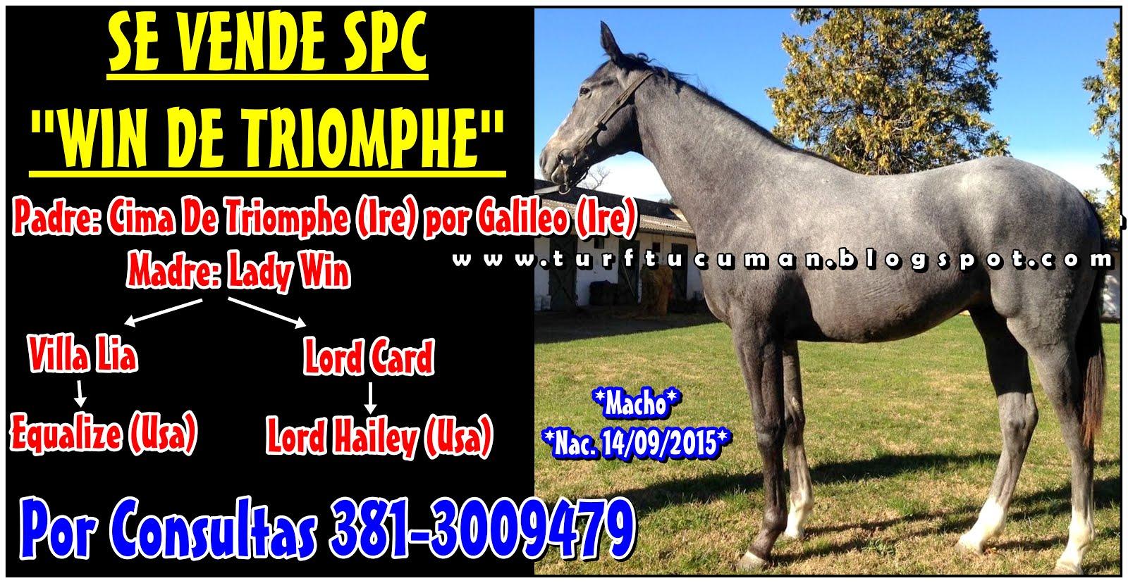 WIN DE TRIOMPHE