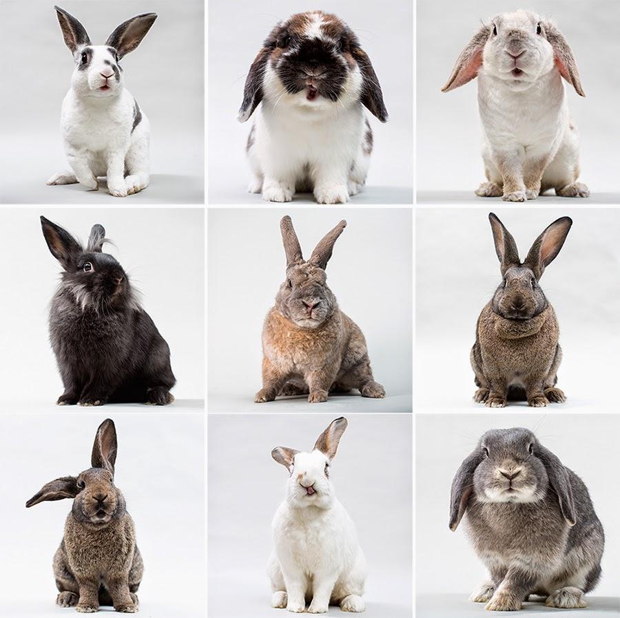 min kanin ryster