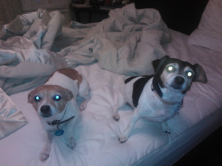 Dogs sleeping in a queensized bed