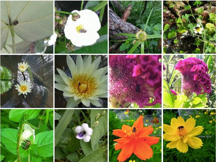 Bunga kesukaan lebah kelulut