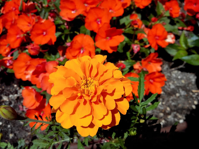 fleur, jardin, villa ephrussi de Rothschild