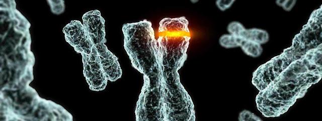 Cours Biologie Moléculaire  SVI S5