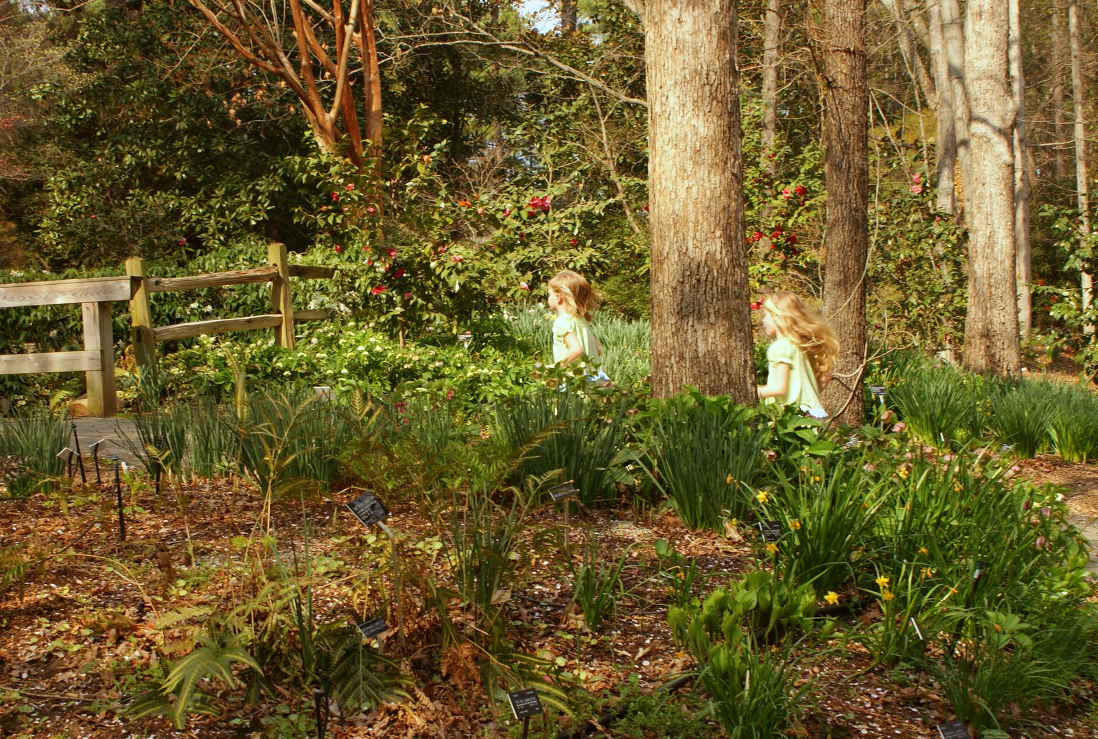 A Little Loveliness: A Stroll Through the South Carolina Botanical ...