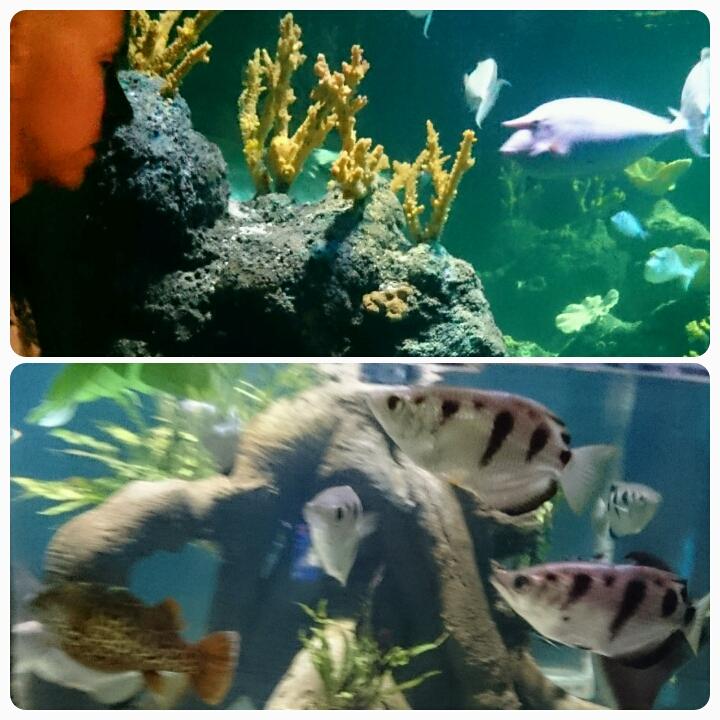 Chessington Sea Life Centre