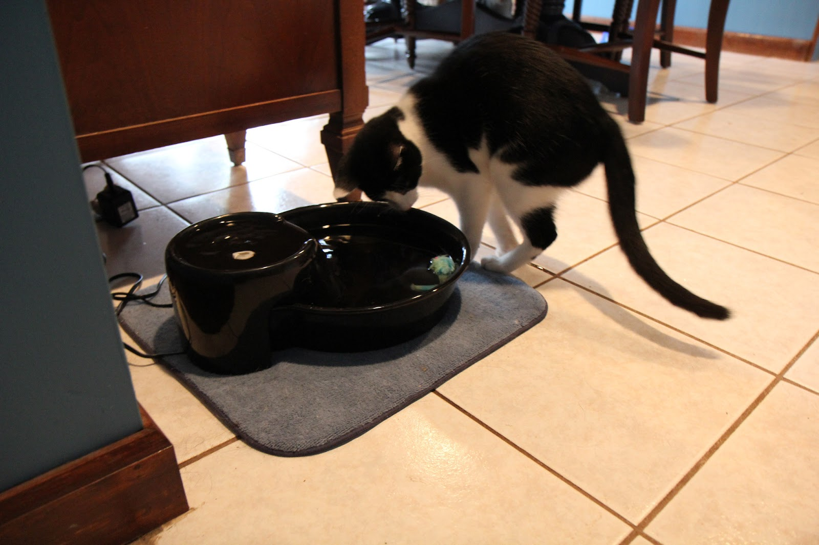 Cat looks at toys floating in a water bowl.