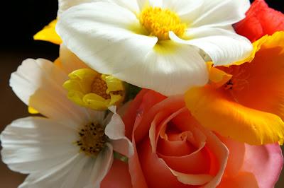 allotment cut flowers - 'growourown.blogspot.com' - an allotment blog
