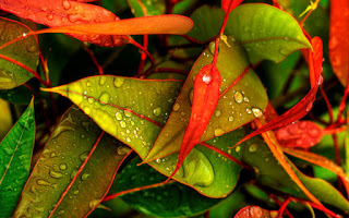 Monsoon Leaf Wallpaper