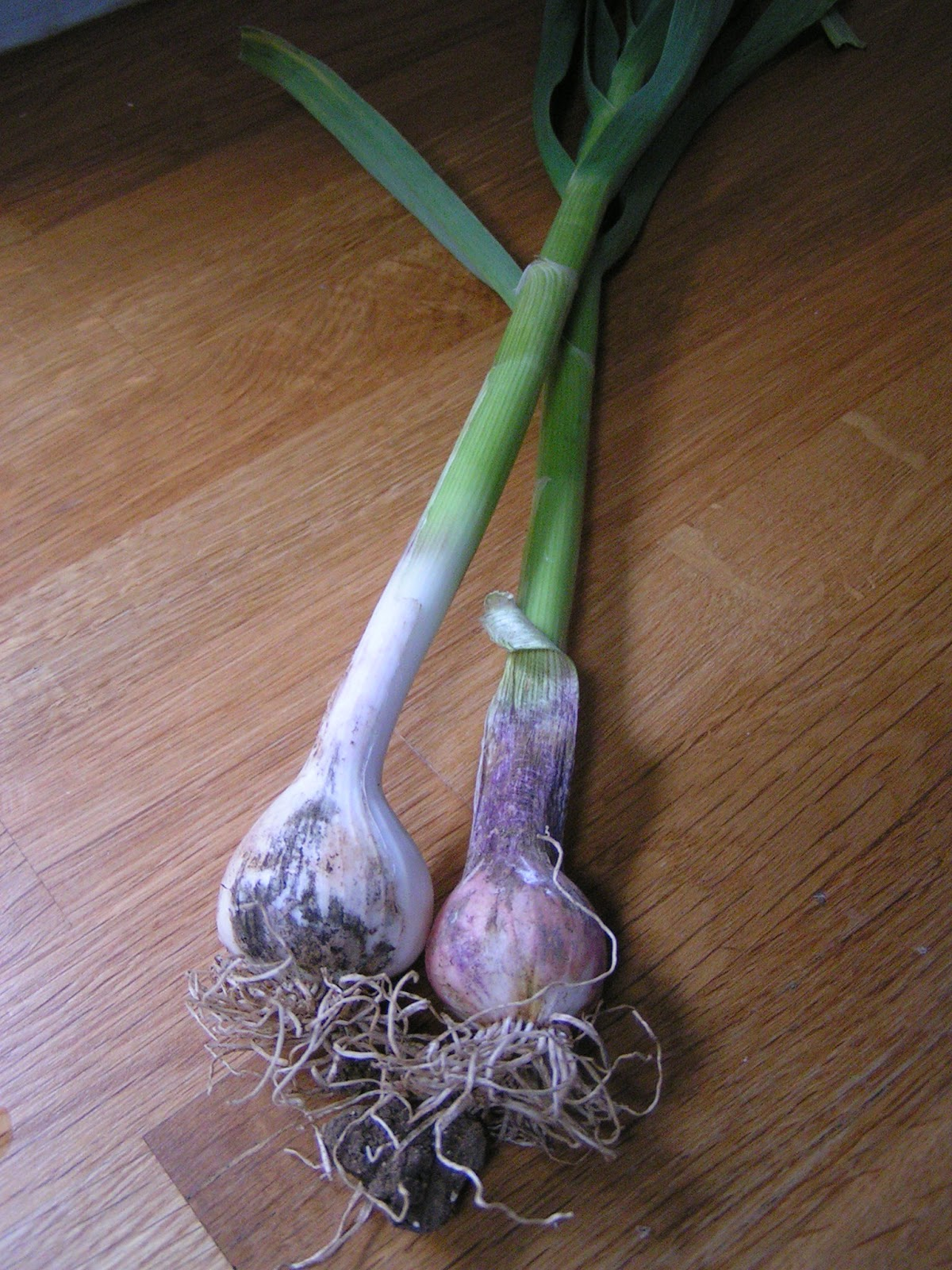 how to cut spring garlic