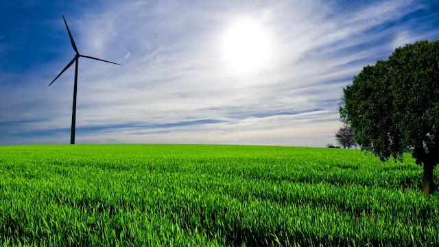 Hình nền cánh đồng xanh dịu êm